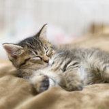 猫 留守番 何日