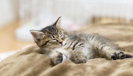 実録│猫に留守番は何日間可能?寂しいと感じる?うちの猫に2日間留守番させた結果はいかに!?