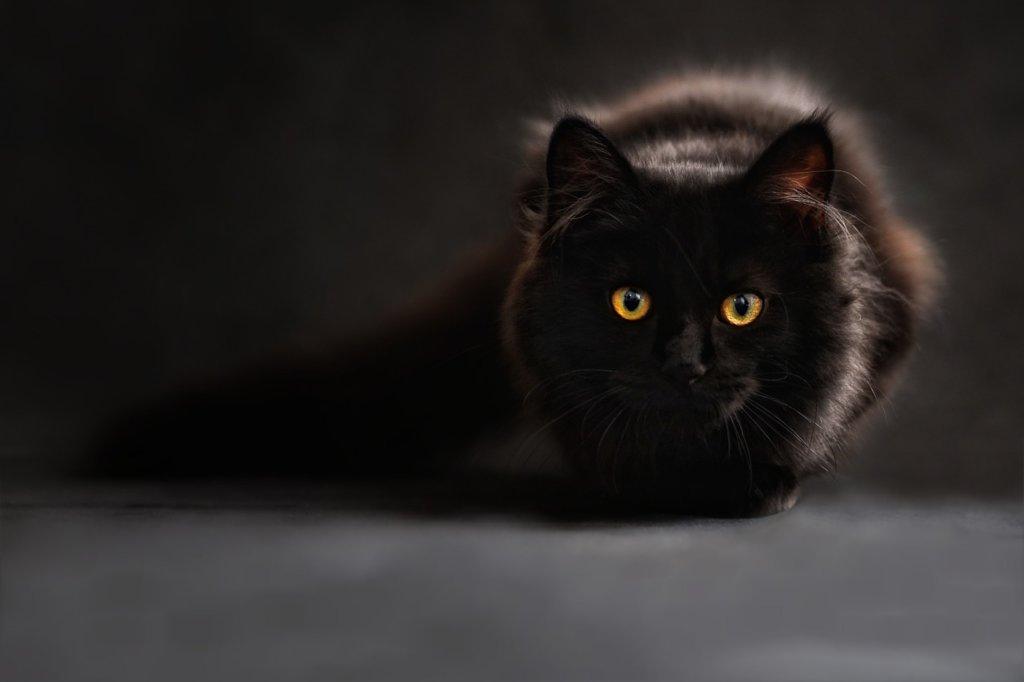 猫の目 大きさ 左右 違う 瞳孔
