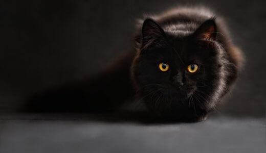 体験談│急に猫の黒目・瞳孔の大きさが左右で違うことに…!病気が原因?治し方は?調べてみた
