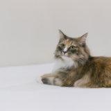 猫 便秘 嘔吐 対策 病院