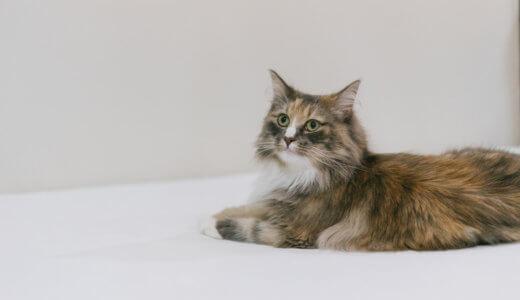 猫が便秘で嘔吐・切れ痔で出血したので病院へ行った。治療法と実際の治療費用や対策法を大公開!