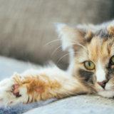 猫 ラクツロース モニラック 量 頻度 与え方