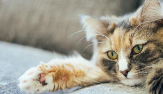 猫の便秘にラクツロースは効果あるの?費用は?我が家の効果アリの与え方や与える量についてもお話します
