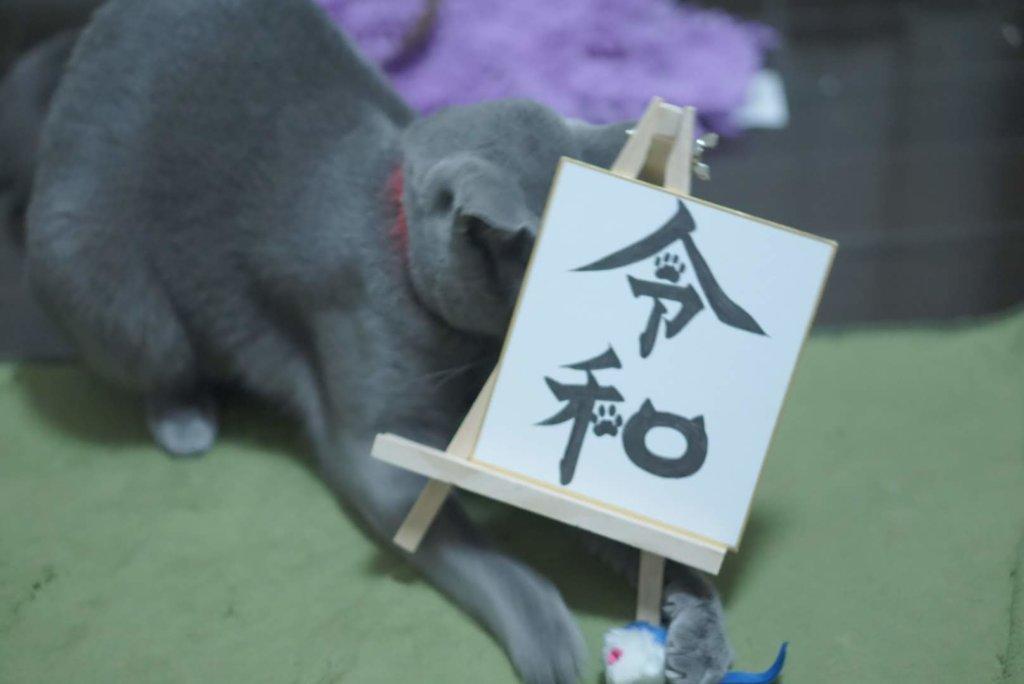 猫 おもちゃ おすすめ 遊ばない 遊ぶ 必要