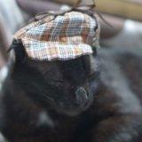 猫 便秘 解消 治った 消化器サポート