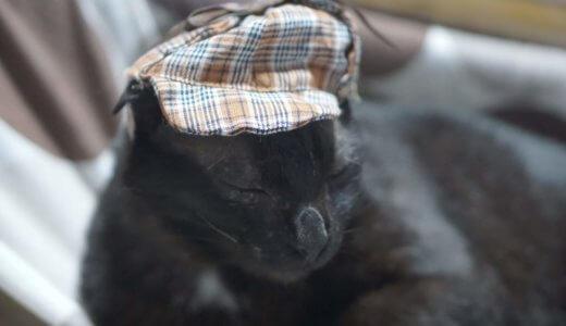 完結編!ひどい猫の便秘が完全に治った!おすすめの解消法はエサをアレに替えるだけでした