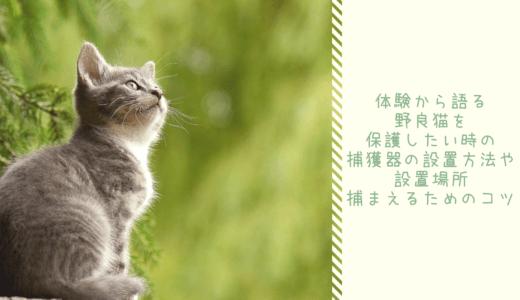 体験から語る・野良猫を保護したい歳の捕獲器の設置方法や設置場所・捕まえるためのコツ