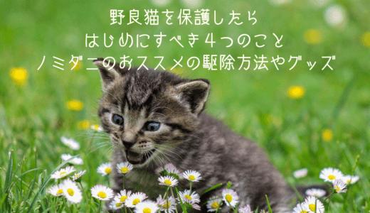 野良猫を保護したら初めにすべき4つのこと│ノミダニのおススメの駆除方法・シャンプーや子猫の方法も