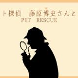 猫 ペット探偵 ペットレスキュー