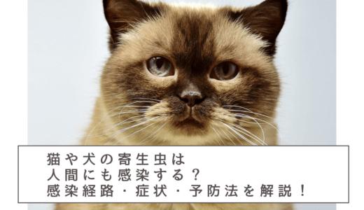 注意│猫や犬の寄生虫は人間にも感染するの?感染経路や症状・予防や治療法も紹介!