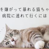 猫 暴れる 病院