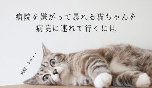 実録│病院に連れて行くと暴れる・嫌がる猫が無事に治療を受けられるようになる方法
