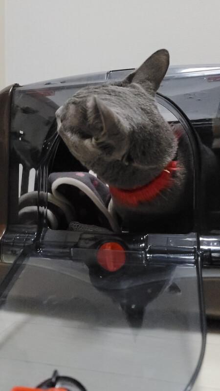 猫 暴れる 病院 キャリーケース