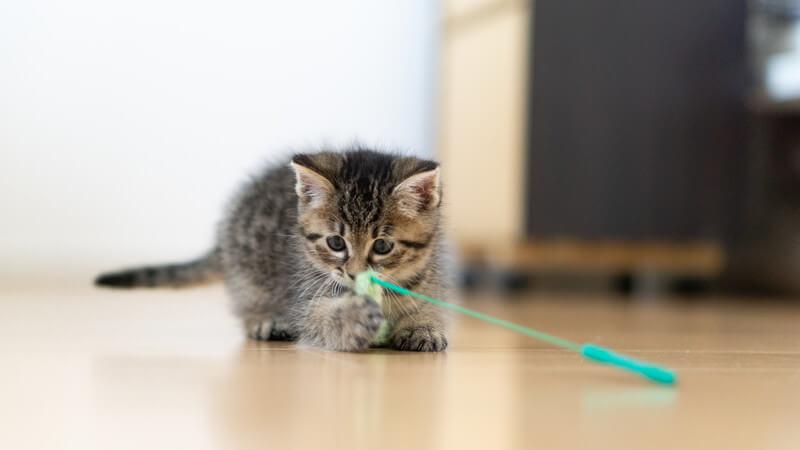 猫 冬 太る 季節 運動 おもちゃ