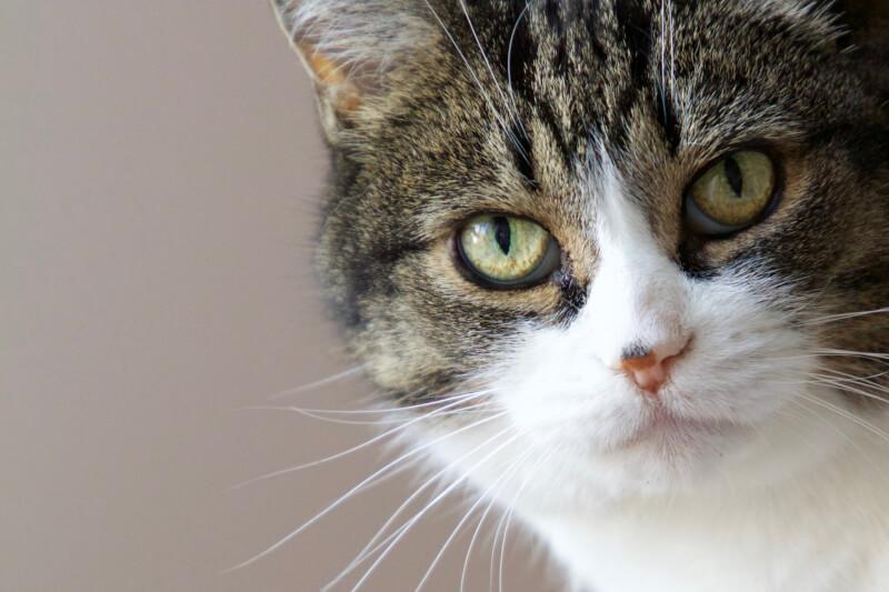猫 食欲 元気がある 誤飲