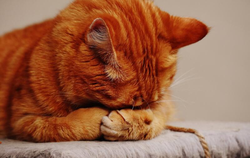 猫 食欲 元気がある 誤飲 症状